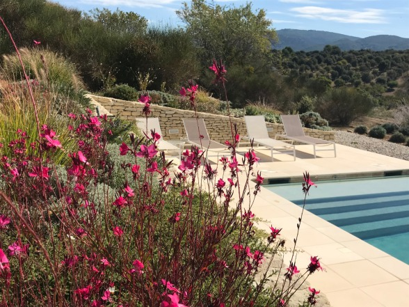 Only natural local flowers around the pool
