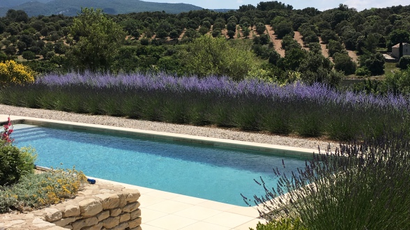 You can smell the flowers all year long - Vacation in Provence
